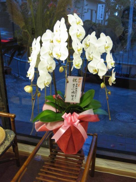 白の胡蝶蘭_a0237010_1953273.jpg