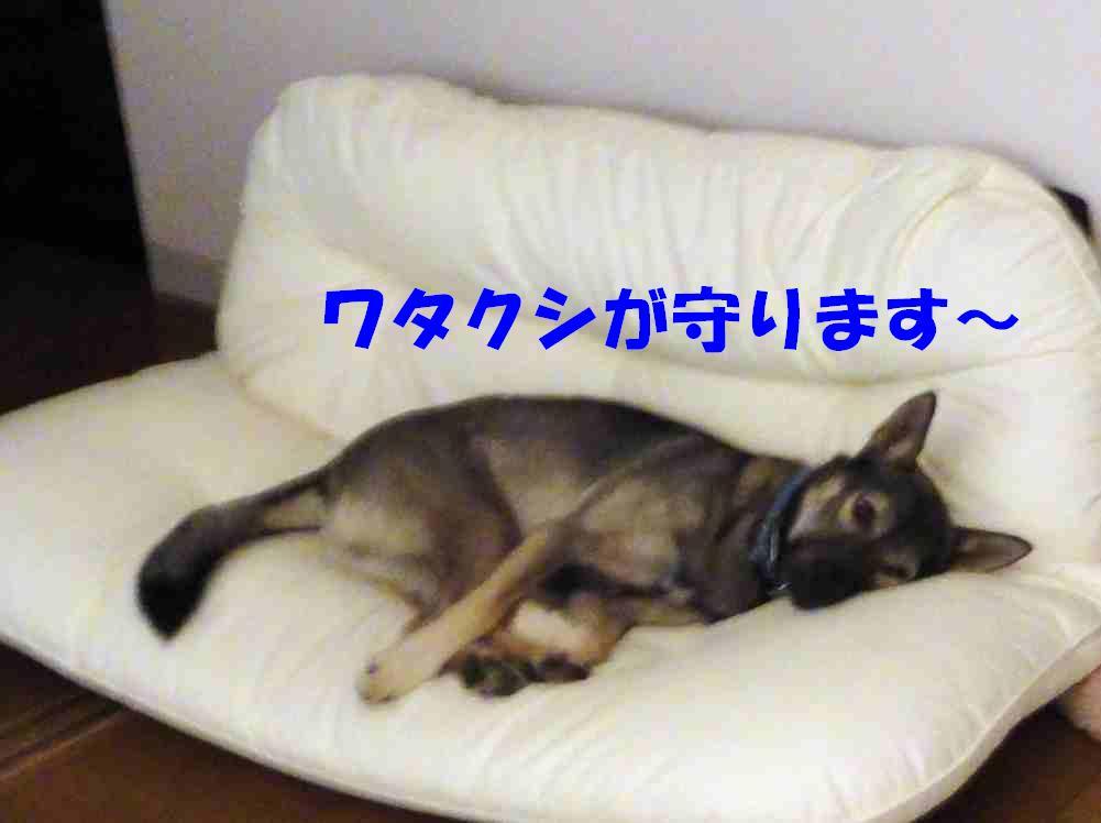 b0207320_10174639.jpg