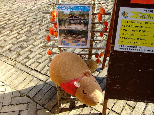長崎からの刺客_a0179837_1645616.jpg