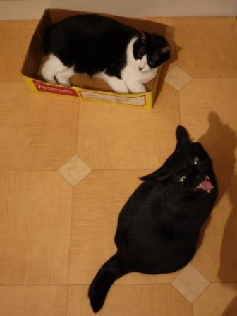 笑う猫 のぇる編。_a0143140_21523990.jpg