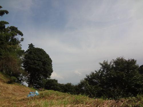 草刈り_c0169176_18155582.jpg
