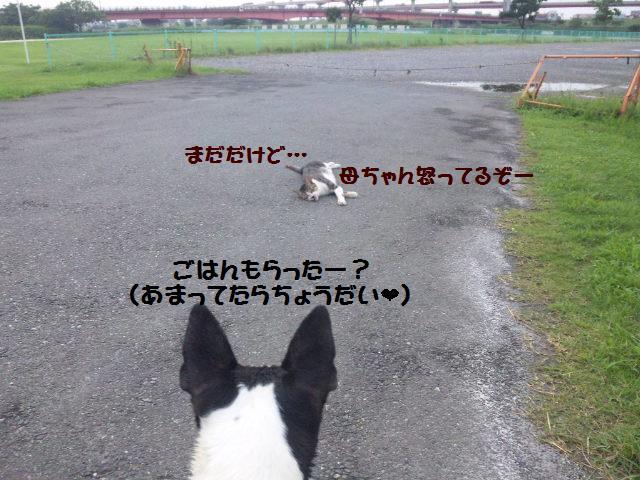 ★荒川アンダーザブリッジ★_d0187891_1193241.jpg