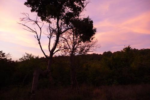 秋の夕暮れ_f0106597_230861.jpg