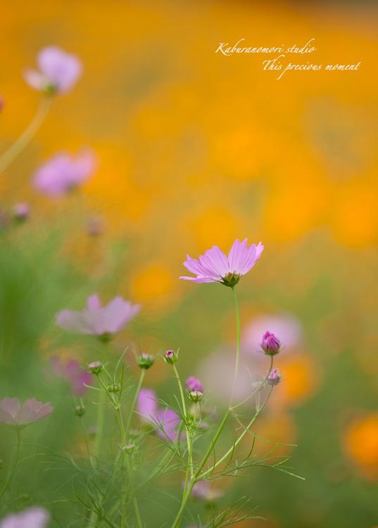 秋の色_c0137403_2251735.jpg