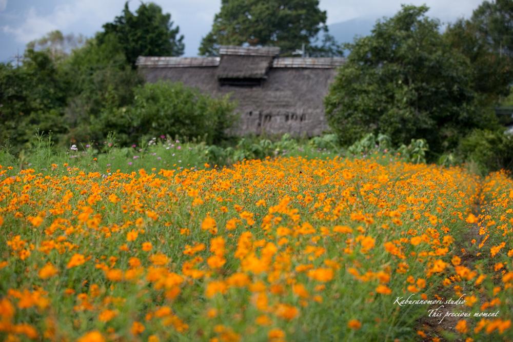 秋の色_c0137403_2274484.jpg