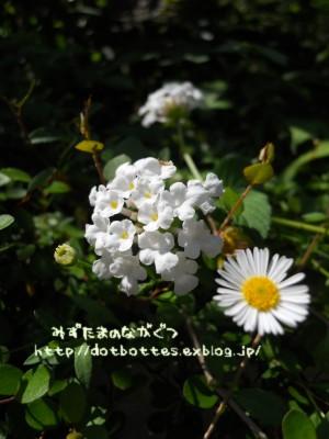 d0170109_22252973.jpg