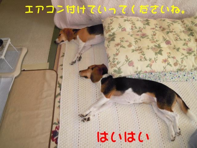 c0166622_822461.jpg