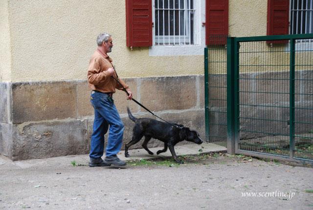 ドイツが犬天国だったわけ_c0099133_10133848.jpg