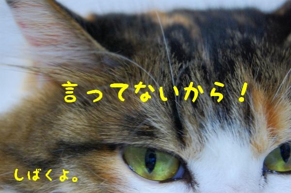 c0181639_0451333.jpg