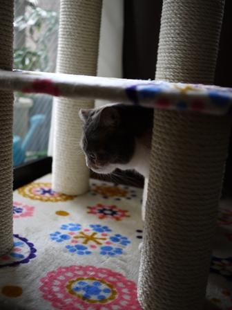 猫のお友だち マミちゃん編。_a0143140_2136665.jpg