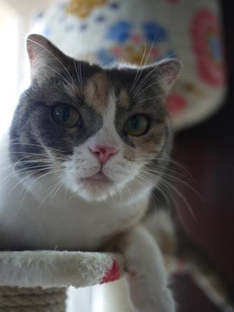 猫のお友だち マミちゃん編。_a0143140_21371874.jpg