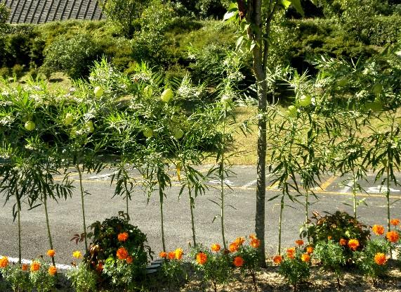 和歌山県植物公園緑花センター _b0093754_23425773.jpg