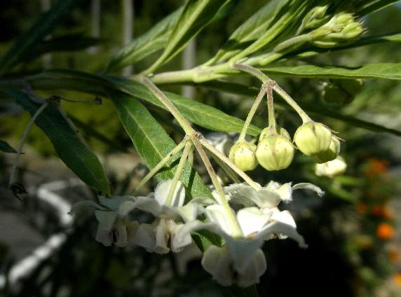 和歌山県植物公園緑花センター _b0093754_23433844.jpg