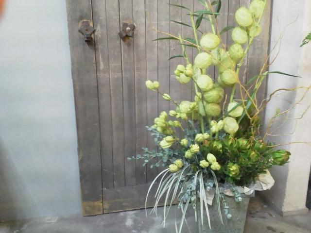 flower_d0162257_23342786.jpg