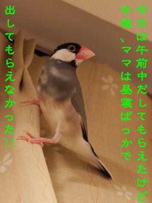 b0158061_21254449.jpg