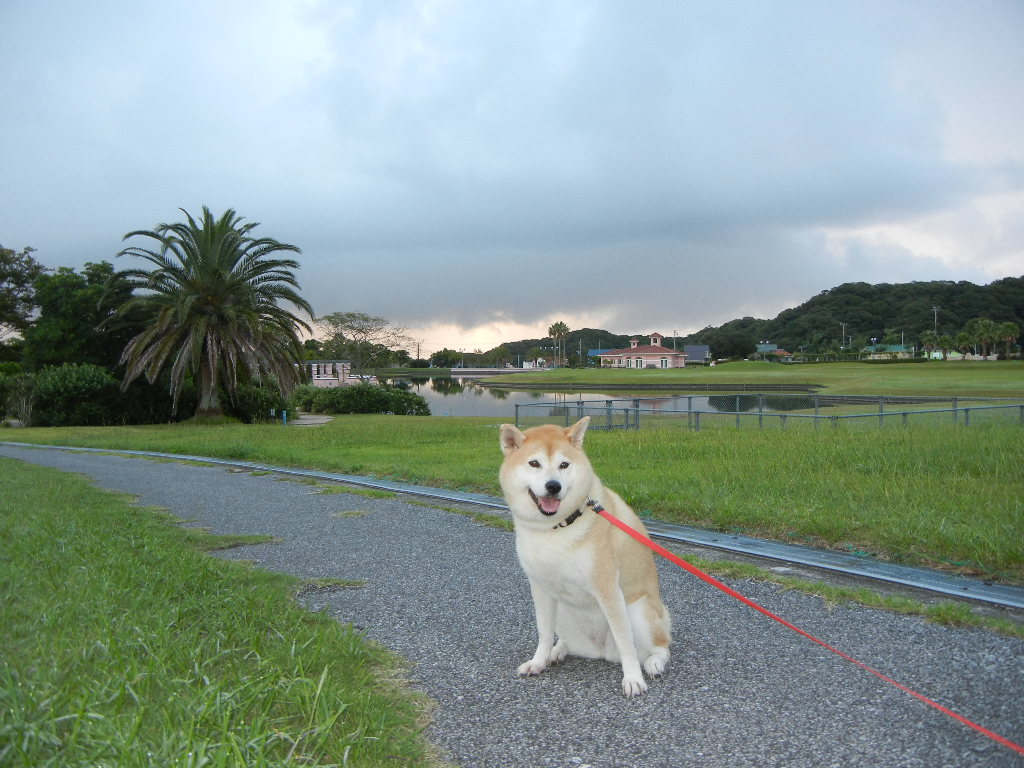 2011年9月11日(日)え~!またトカゲ!_f0060461_12352380.jpg