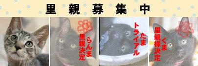 a0064067_16445483.jpg