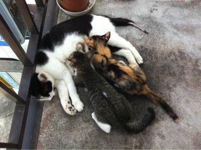 猫授乳中_a0002672_1336274.jpg