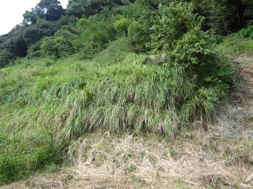 草刈り_c0169176_17353294.jpg