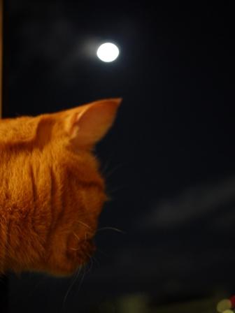中秋の名月猫 しぇる編。_a0143140_2156431.jpg