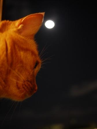 中秋の名月猫 しぇる編。_a0143140_2158458.jpg