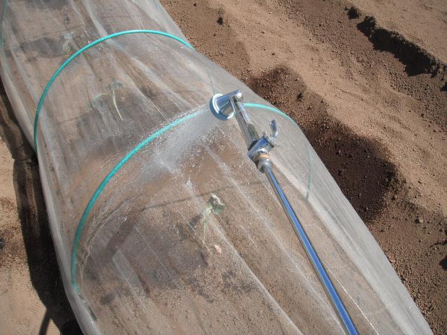 ナスの収穫&定植したブロッコリーに給水&四角豆の収穫_c0222448_12582456.jpg