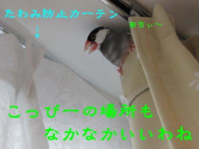 b0158061_2025849.jpg
