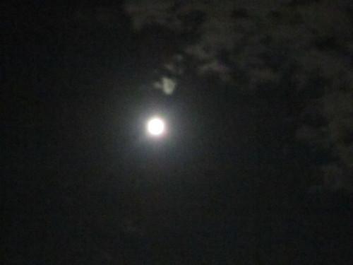 お月見_f0204295_2113747.jpg