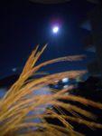 月見の仕方_f0218407_9292882.jpg