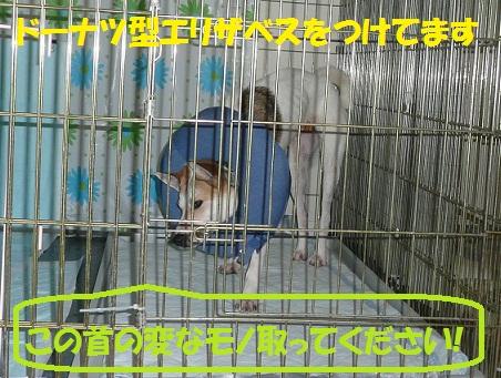f0121712_14414118.jpg