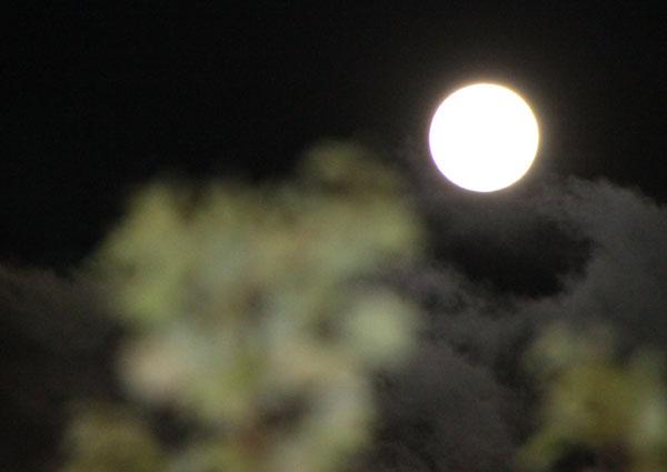 名月祭 平野神社_e0048413_1883377.jpg