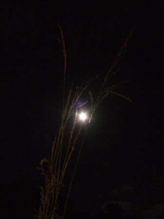 中秋の名月_d0247023_035571.jpg