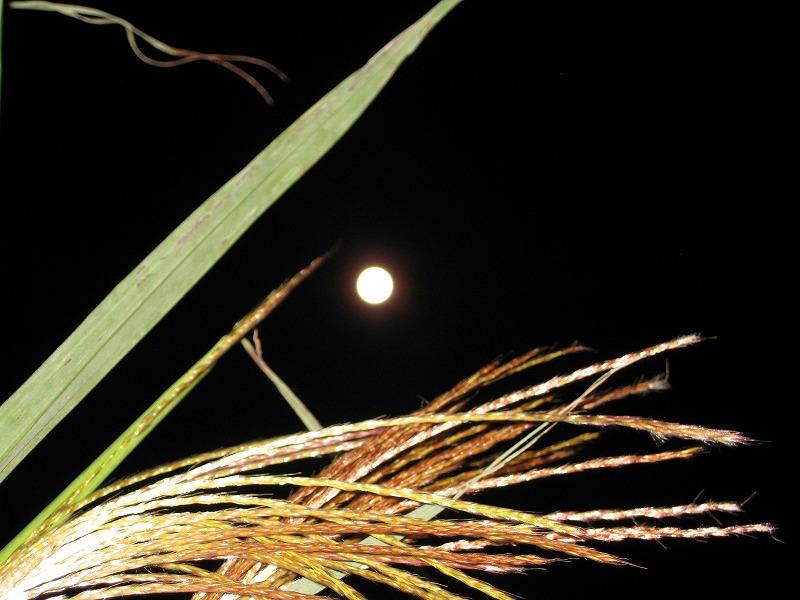 中秋の名月・・・_e0187233_10104689.jpg