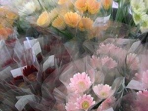 気軽に切花「ガーベラ」はいかが?_c0141652_16555448.jpg