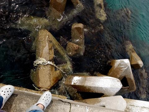 本州の果て大間崎、本マグロを釣り上げろ!の旅【2】_e0071652_2144866.jpg