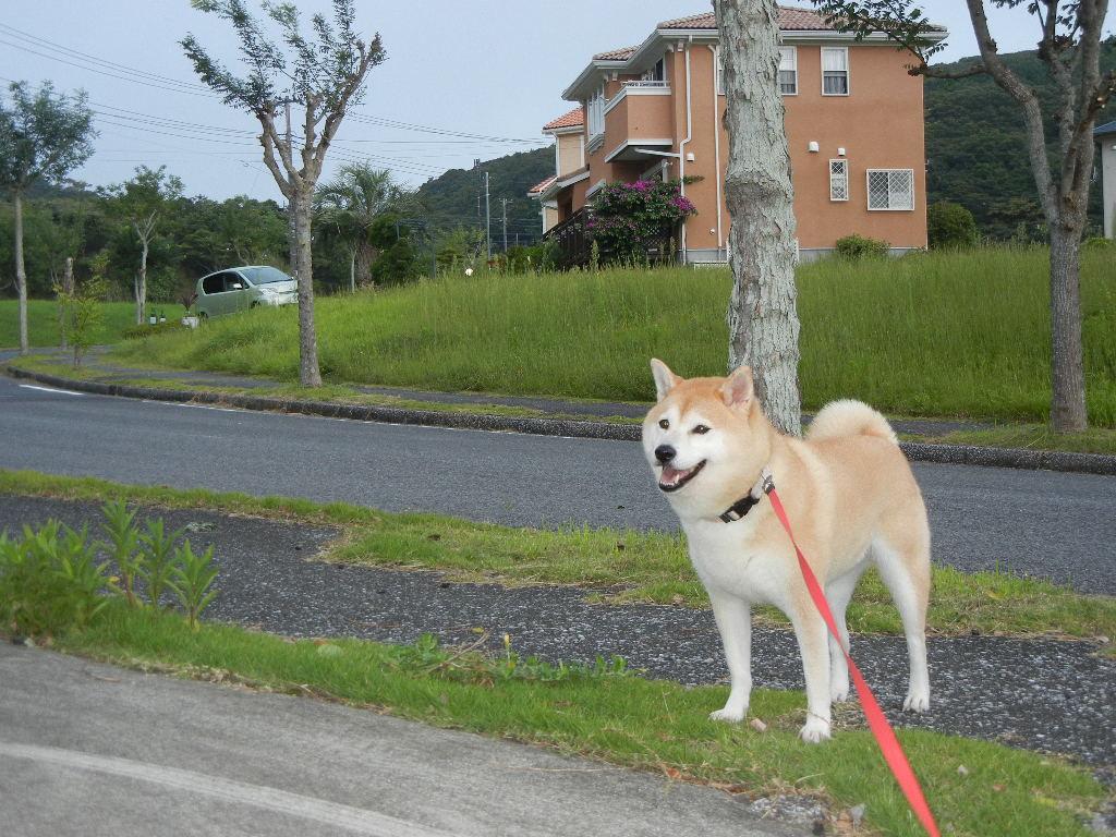 2011年9月13日(火)心ちゃんは早速!でも・・・_f0060461_10342257.jpg