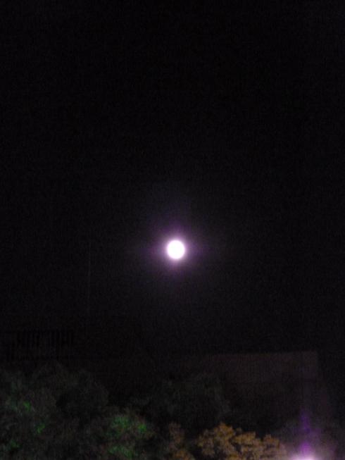仲秋の名月に 想いをはせて。。。 *。:☆.。_a0053662_2251719.jpg