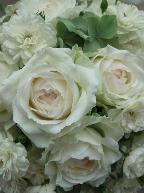 オークリーフ(白薔薇と紫陽花のブーケ)_f0049672_11174269.jpg
