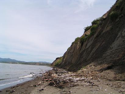 無煙浜の崖の化石採集と漂着物観察_f0078286_9561967.jpg