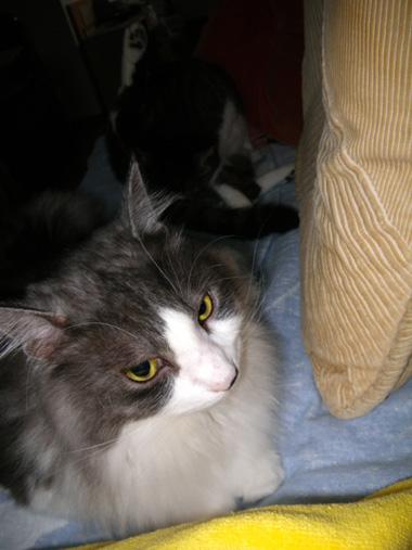 猫ベッドのHuu&チョビ♪_a0136293_14561119.jpg