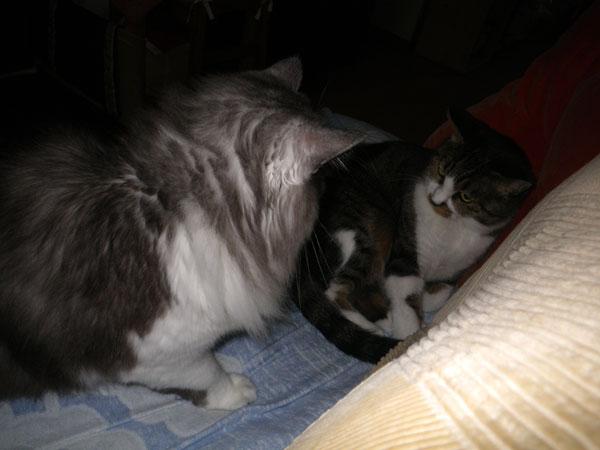 猫ベッドのHuu&チョビ♪_a0136293_1459814.jpg