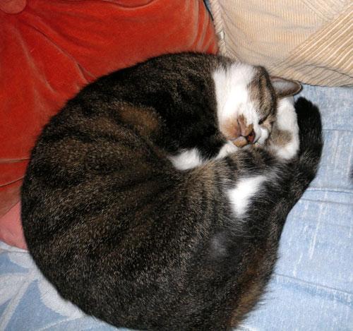 猫ベッドのHuu&チョビ♪_a0136293_1501023.jpg