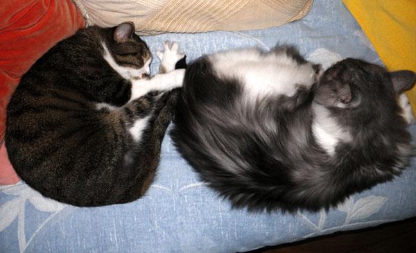 猫ベッドのHuu&チョビ♪_a0136293_152345.jpg