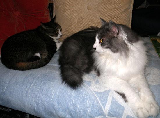 猫ベッドのHuu&チョビ♪_a0136293_1542599.jpg