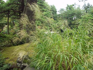 清水園 夏から秋へ : 北方文化 ...