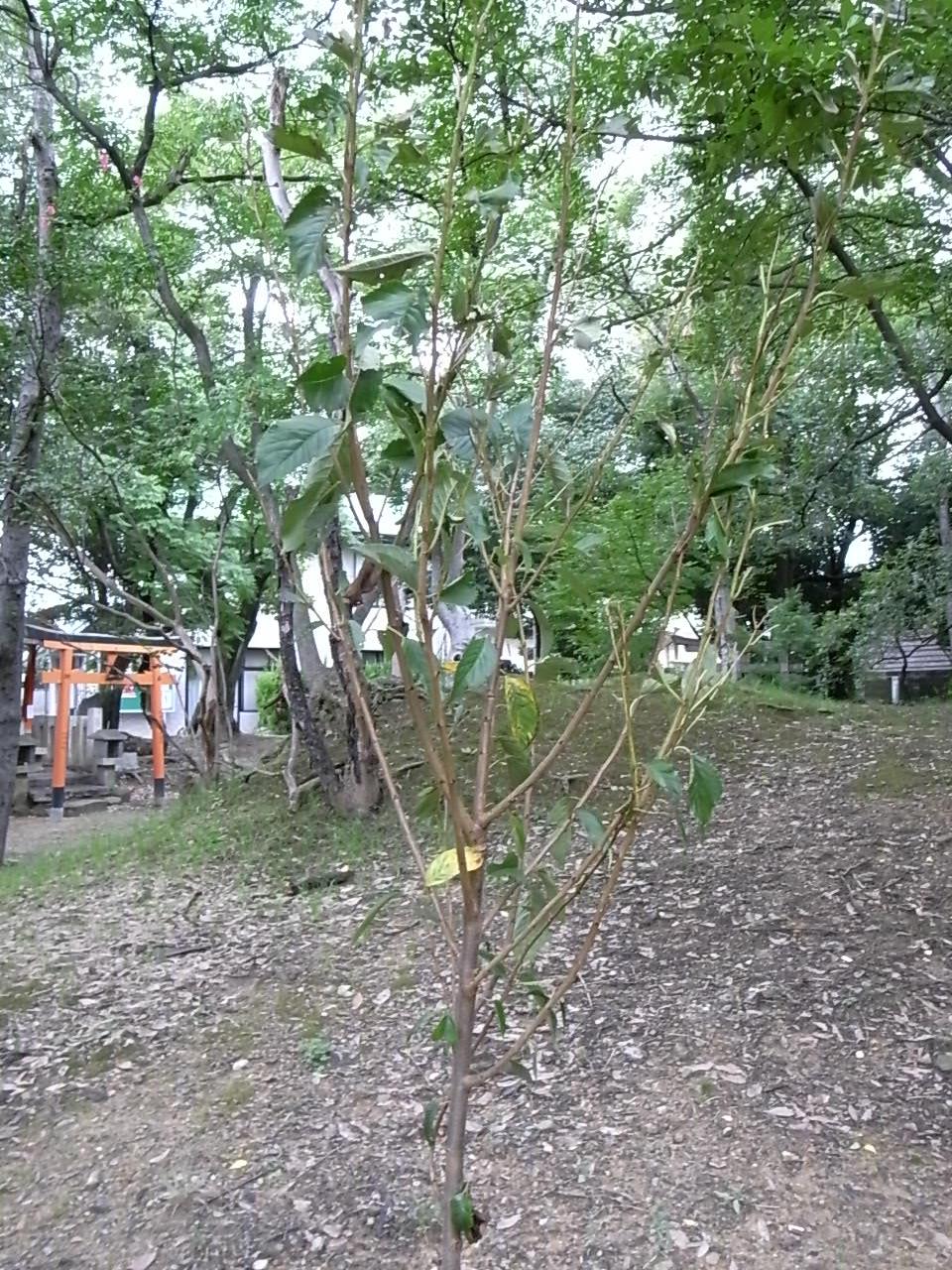 たくさんの樹木_f0218831_10303166.jpg