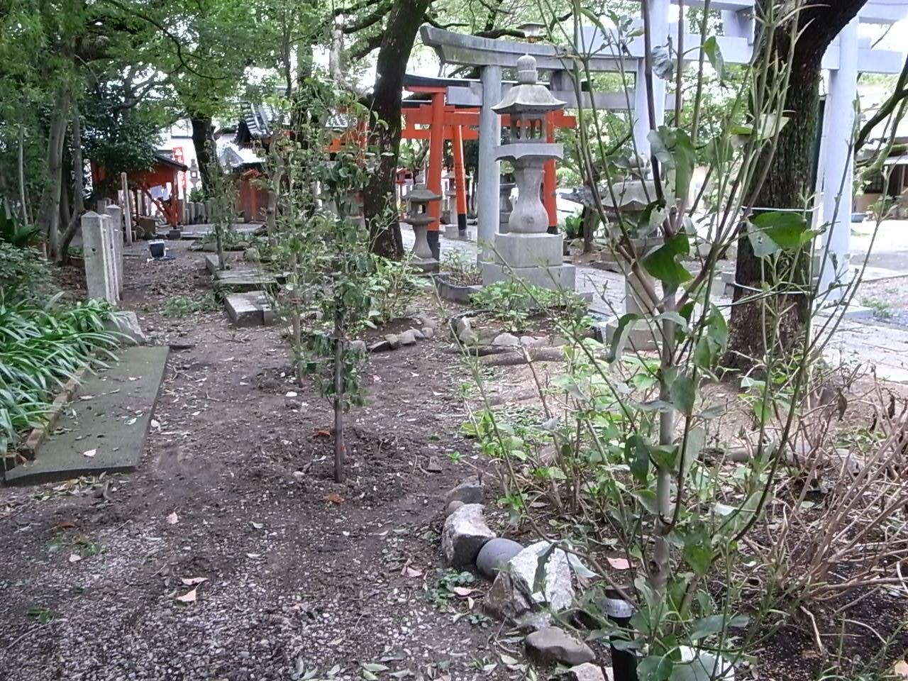 たくさんの樹木_f0218831_10311149.jpg