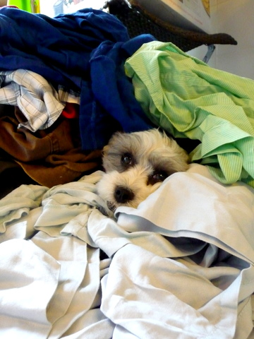 Truffle and Laundry _c0201334_10285496.jpg