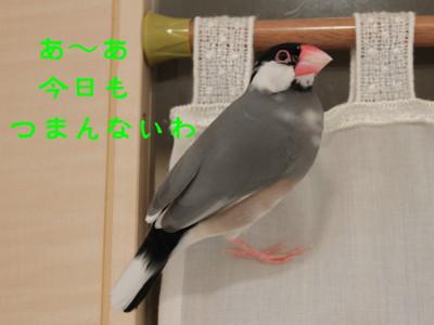 b0158061_2051342.jpg