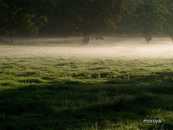 霧たなびく_c0085877_6584362.jpg